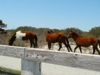 Assateague Island National Park